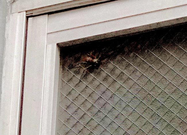 朝蜘蛛3.jpg