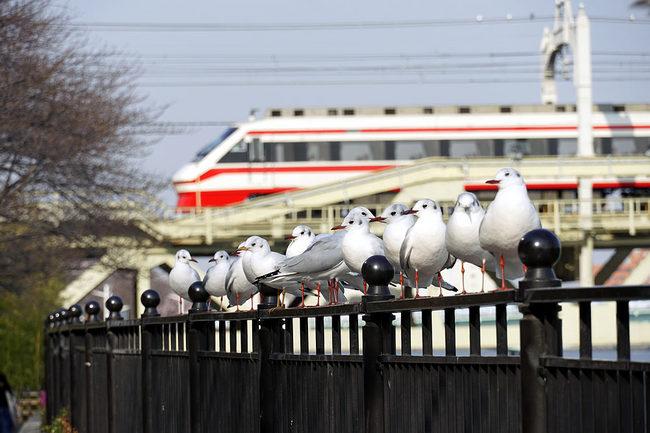 鳥鉄♪.jpg