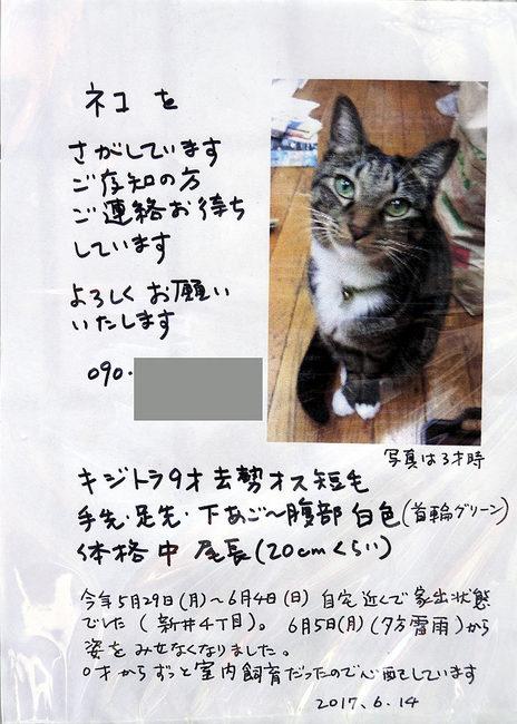 捜し猫.jpg