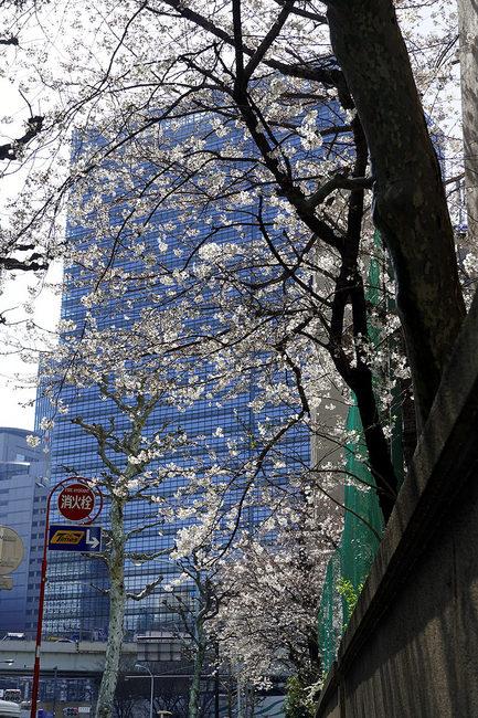 桜♪.jpg