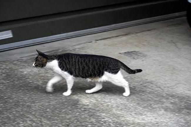 流し猫♪.jpg