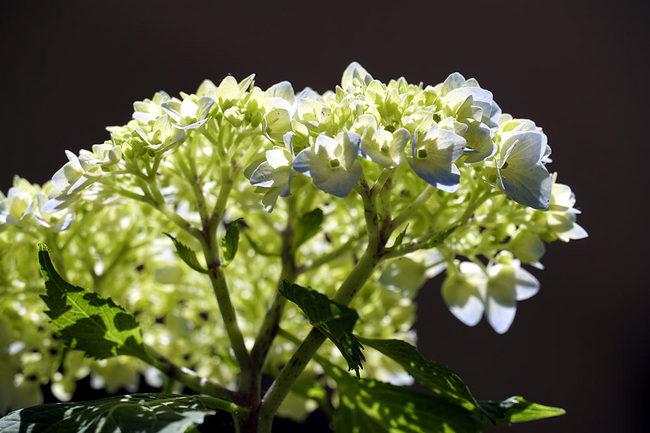開花♪.jpg